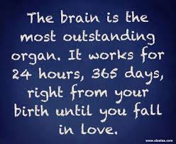 the brain works until you fall in love